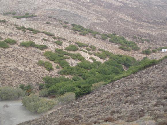 Γριά Σπηλιά